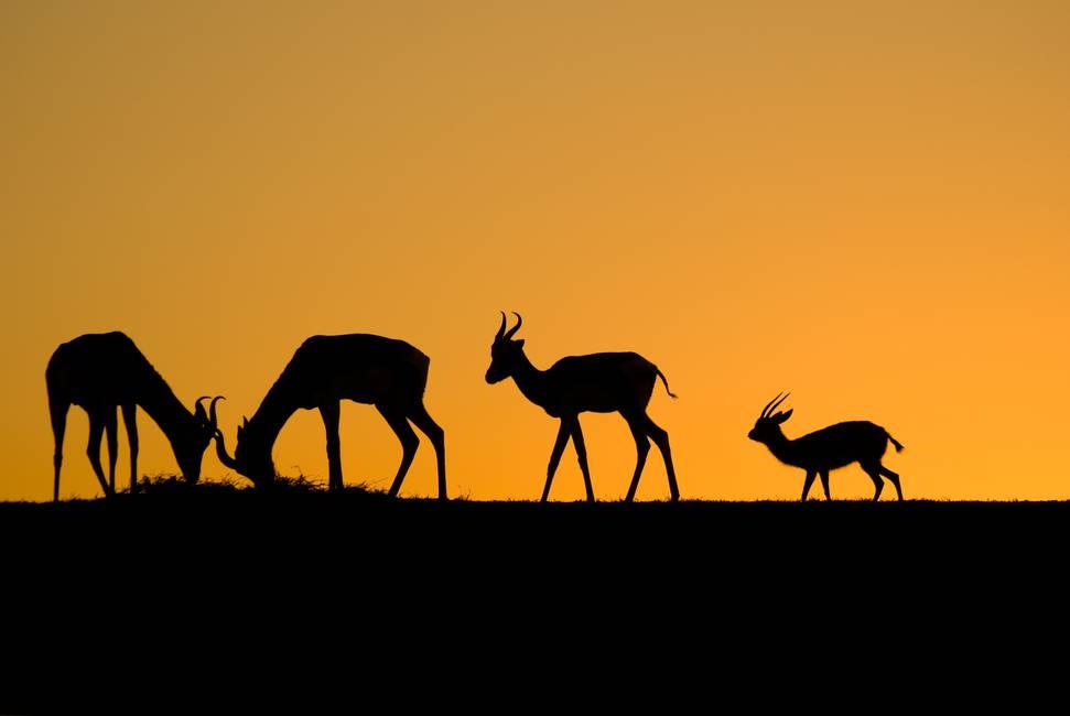 ¿Hacia una ciudadanía animal?  Sobre «Zoopolis», de Sue Donaldson y Will Kymlicka