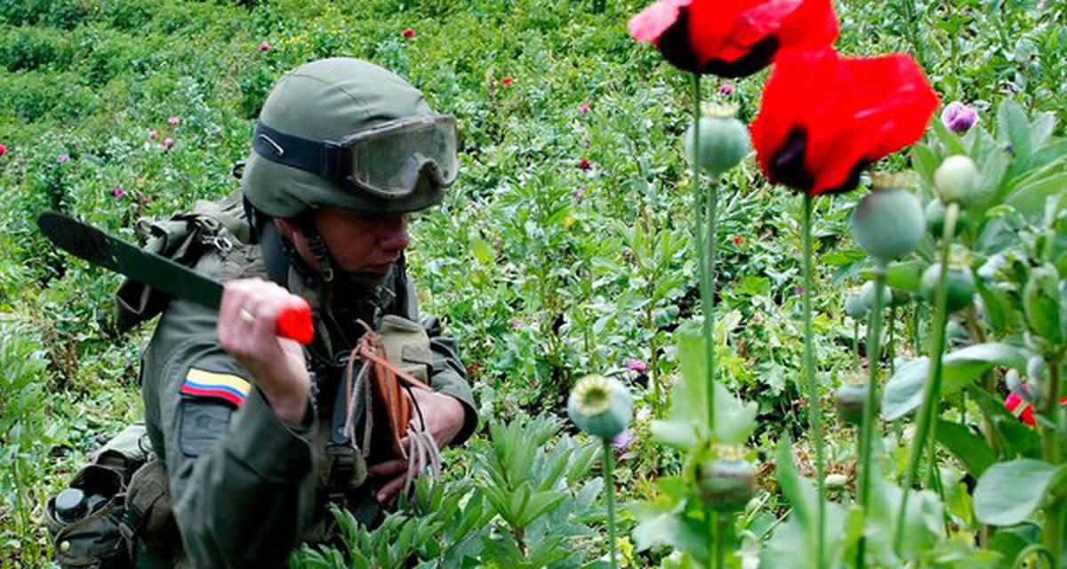 A política de drogas na América Latina: obstáculos e próximos passos
