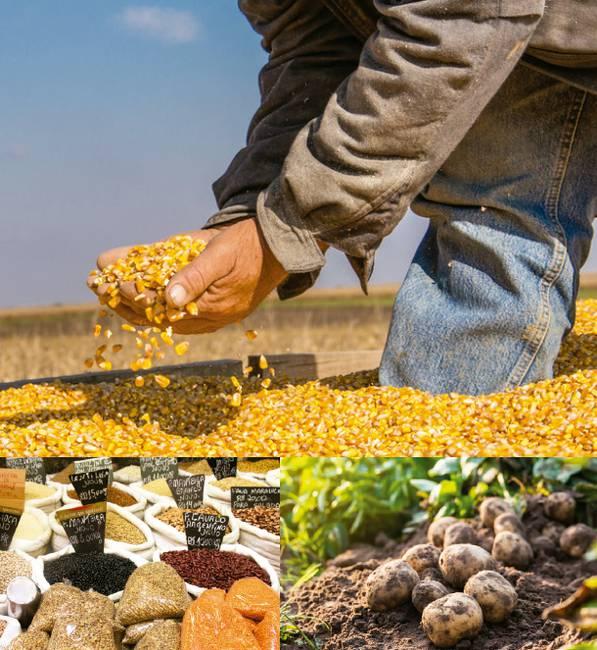 Análisis   La transformación social-ecológica del sector agrario en América Latina   Pasos y actores claves   2018