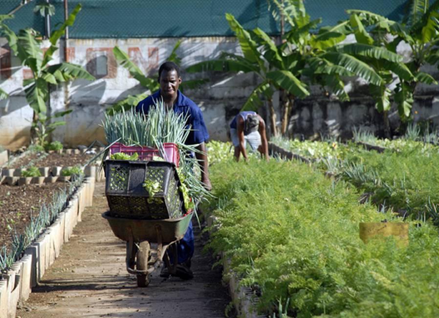La agricultura urbana: un fenómeno global