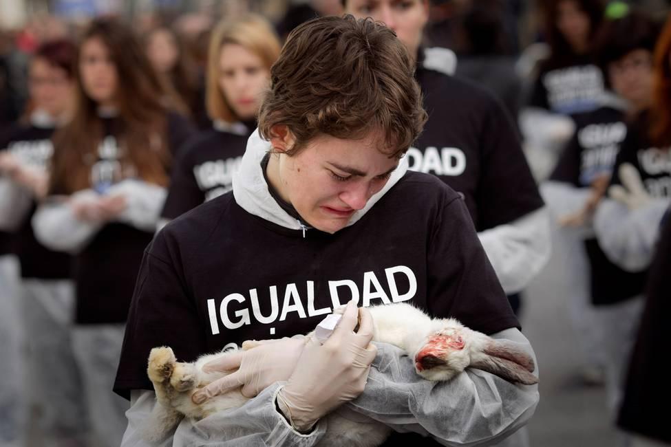 América Latina: movimiento animalista y luchas contra el especismo