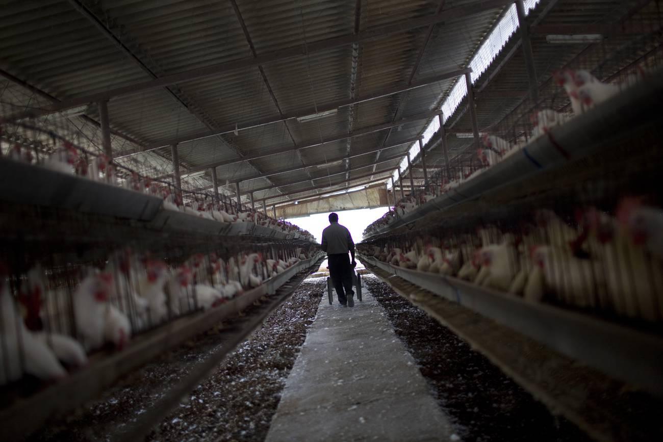 Las zoonosis, entre humanos y animales